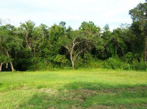 2636 Spruce Creek Blvd., Nature Lot in Spruce Creek